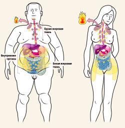 Высокоуглеводная диета для похудения меню на каждый