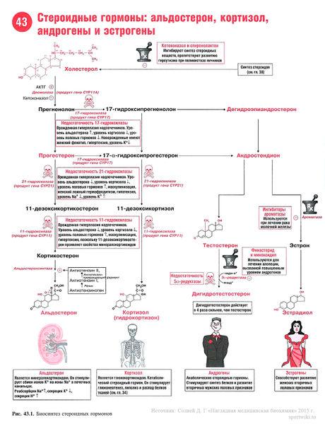 Синтез женских гормонов
